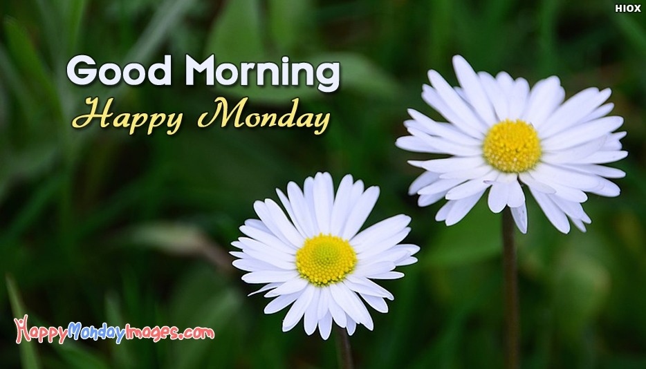 Good Morning Happy Monday Hd