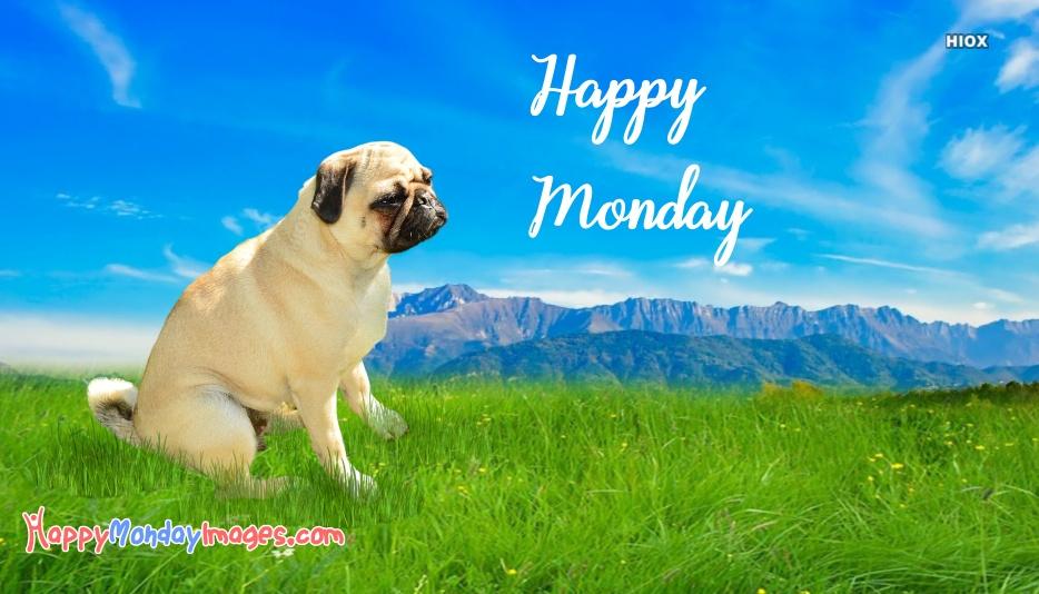Happy Monday Dog Images