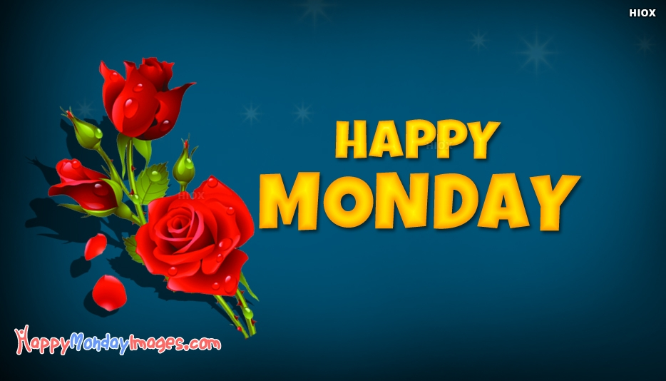 Happy Monday Rose