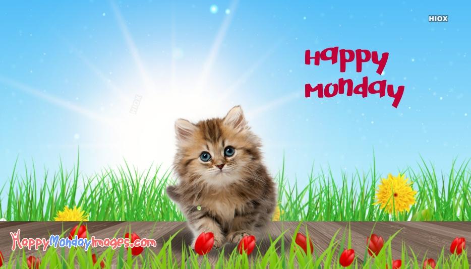 Monday Kitten