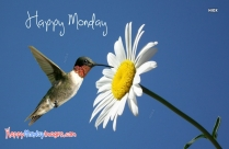 Happy Monday Bird