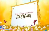 Happy Monday Sunflower